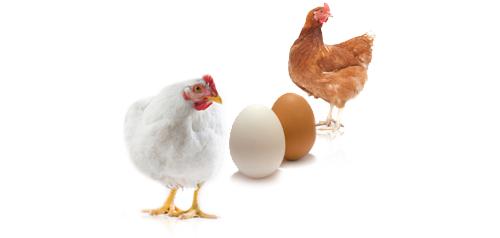 Brown vs white egg